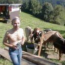 fotm01_cows2