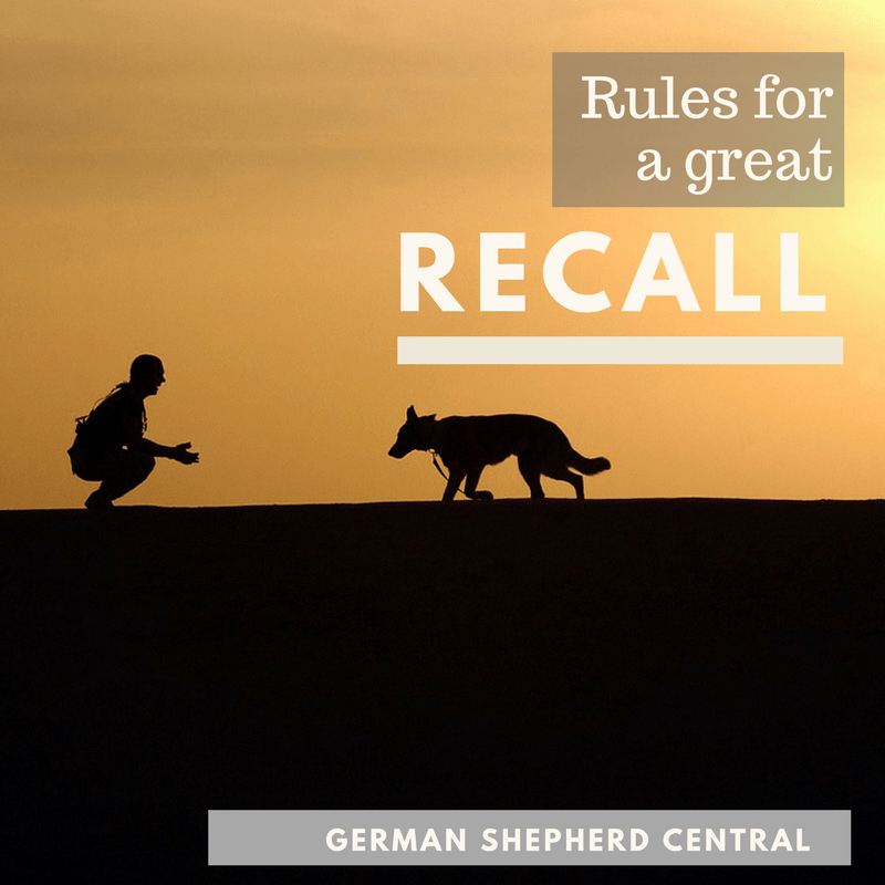 5 rules for teaching your GSD a great recall
