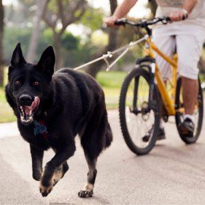 21 Ways To Exercise Your German Shepherd