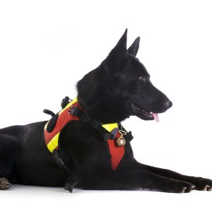 Best No Pull Harness For German Shepherds