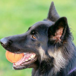 7 Best Balls For German Shepherds