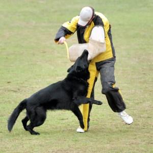 What Is Schutzhund Training?