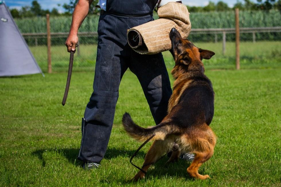 Schutzhund for German Shepherds