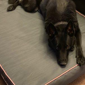 7 Best German Shepherd Dog Beds