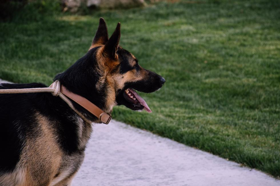 Teaching your dog to Speak and Quiet