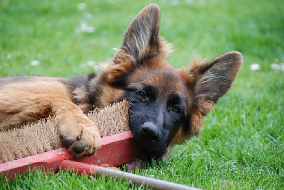 Best vacuum for german shepherd hair