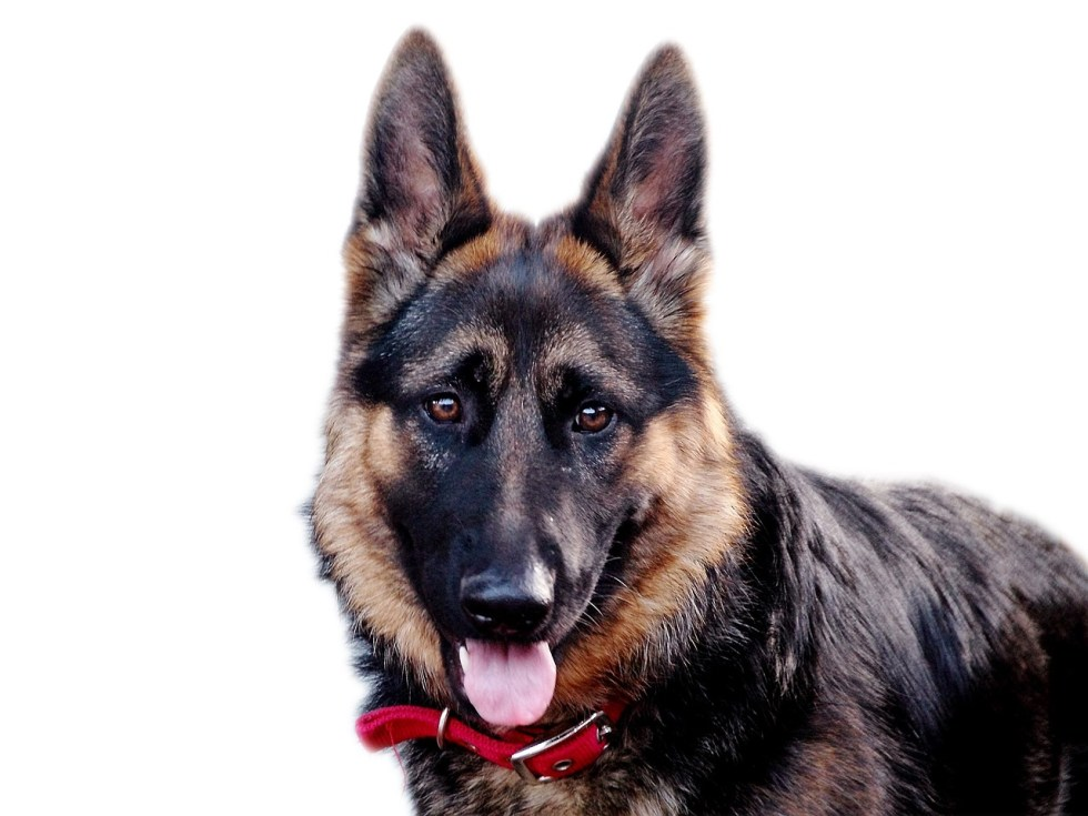 Dog Names For German Shepherds