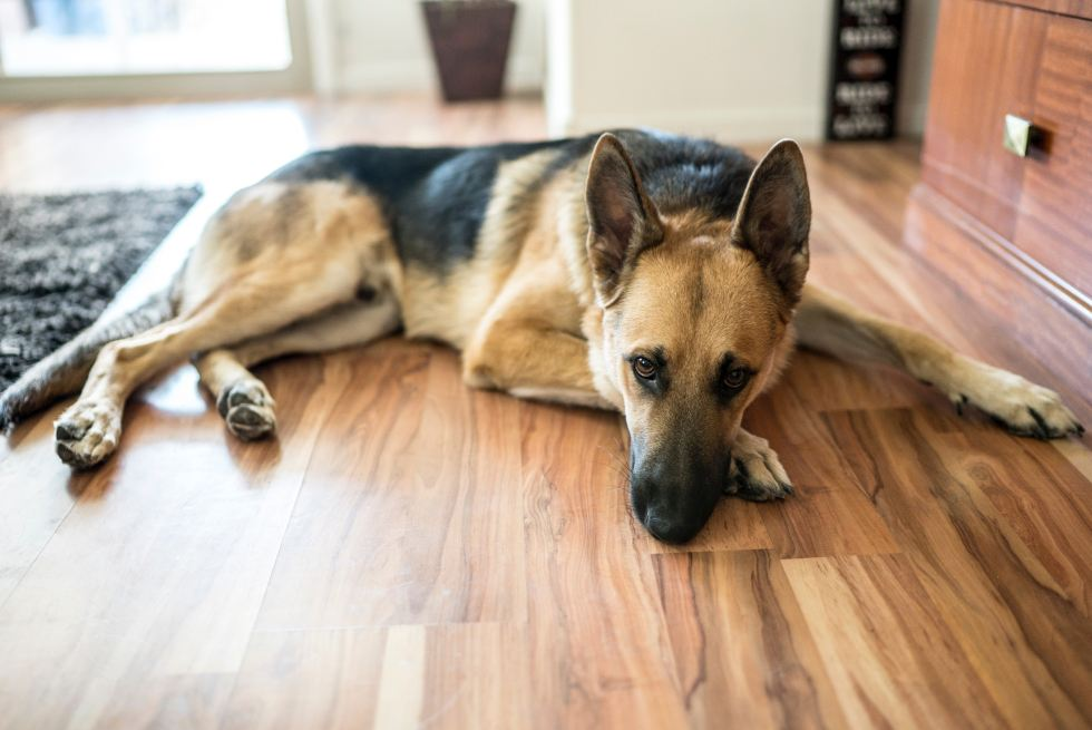 Best vacuum for German Shepherd homes