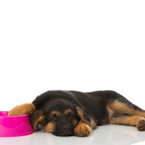 Best Dog Bowls For German Shepherds