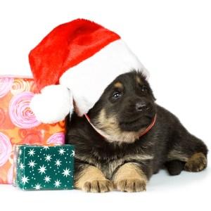 Christmas Gifts For German Shepherds