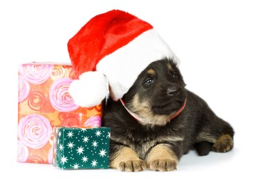 Christmas Gifts For German Shepherds