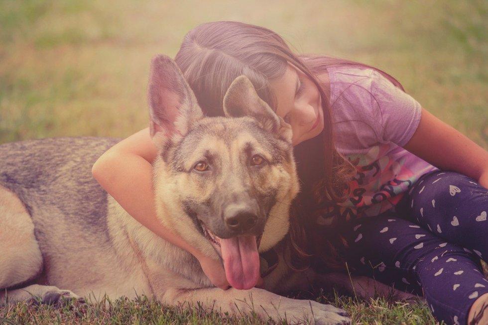 german shepherd affection