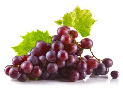 Can German Shepherds Eat Grapes