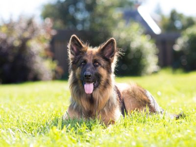 Supplements For Dog Coat Growth