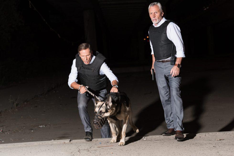 GSD as police dog