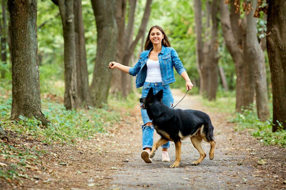 Woman walking German shepherd in the wood