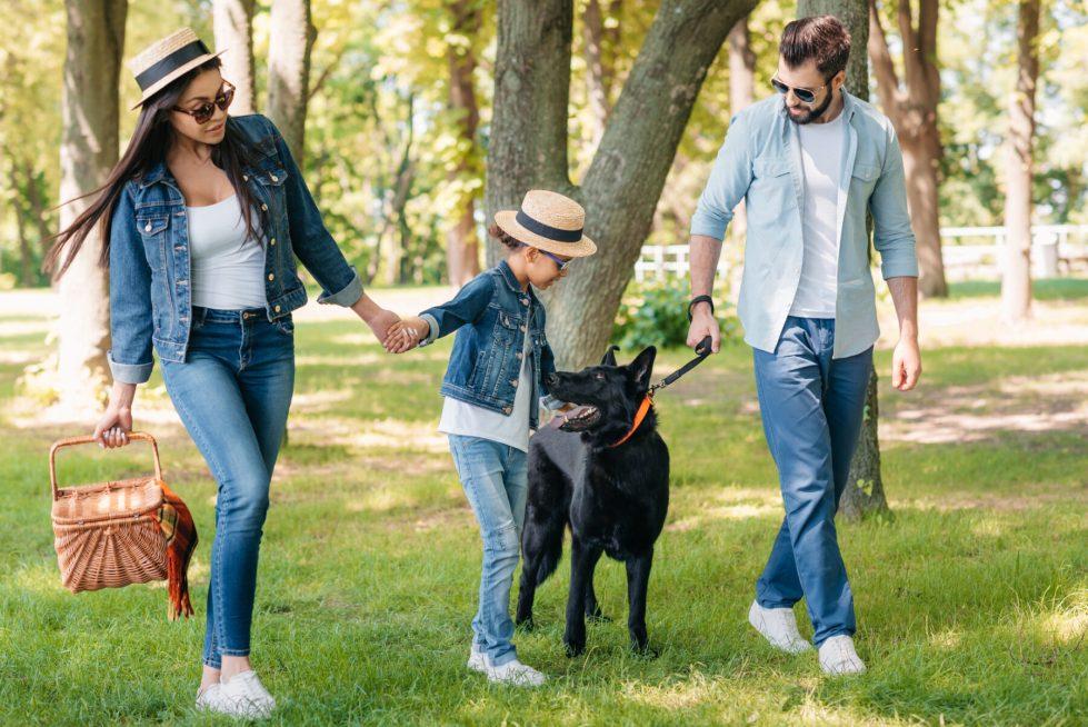 Are German Shepherds Friendly?