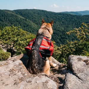 Best Dog Backpacks For German Shepherds