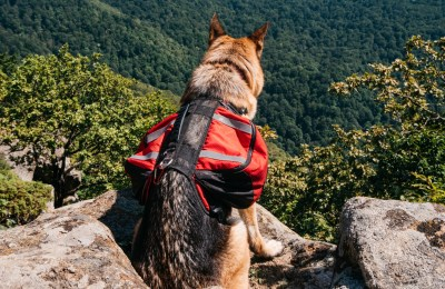Best Dog Backpacks For German Shepherd
