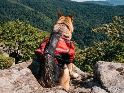 Best Dog Backpacks For German Shepherd