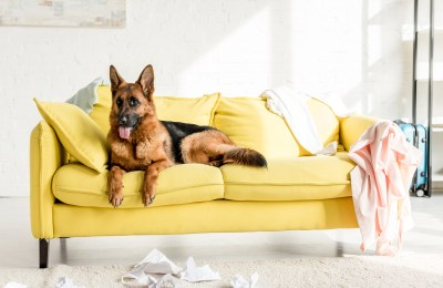 Why Does My German Shepherd Destroy Everything?