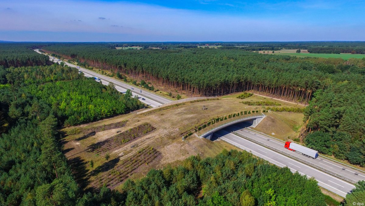 Green bridges help animals safely cross the German Autobahn
