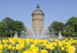 Water fountains, tulips and a water tower in perfect combination