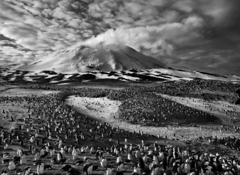 The earth's largest concentration of penguins on Zavodovski Island in the far South Atlantic