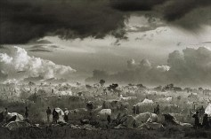 Migrations: Rwandan refugee camp at Goma, in the Democratic Republic of the Congo, 1994