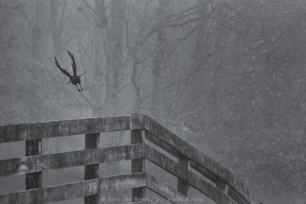 Vogel in de mist