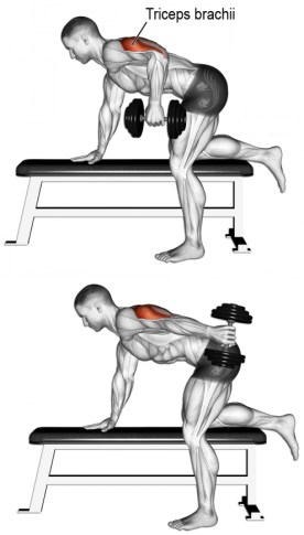 TRICEP DUMBBELL KICKBACKS