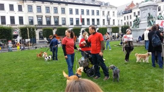 Brusselse honden op Place du Luxembourg solidair met dakloze viervoeters in Roemenië.