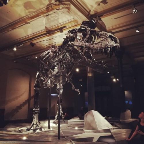 T-Rex-Skelett im Naturkundenmuseum, Berlin