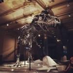 T-Rex Skeleton in Natural History Museum, Berlin