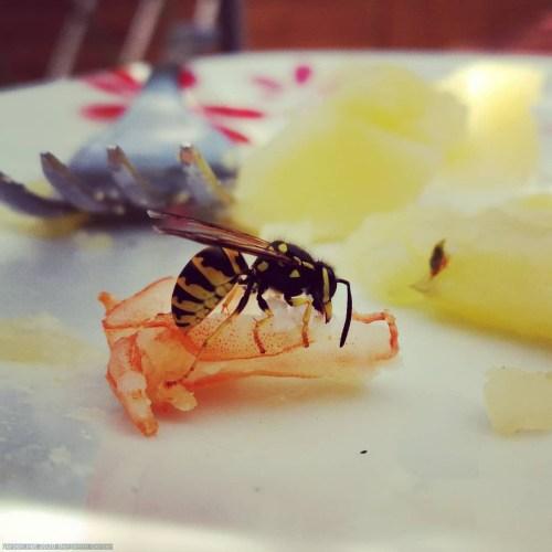 Wasp eats Shrimps