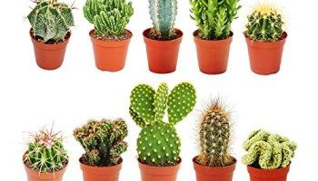 Die 10 Besten Geschenke Fur Gartner Und Pflanzenliebhaber