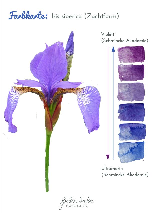 Aquarellfarben mische - Farbkarte Iris | Gesche Santen Blog