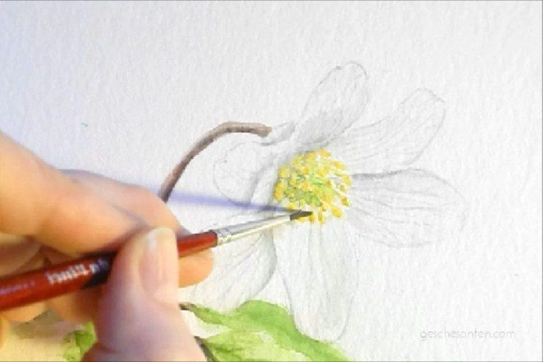 Buschwindröschen (Anemone nemorosa) – Ein frühlingshaftes Aquarell entsteht {Video}
