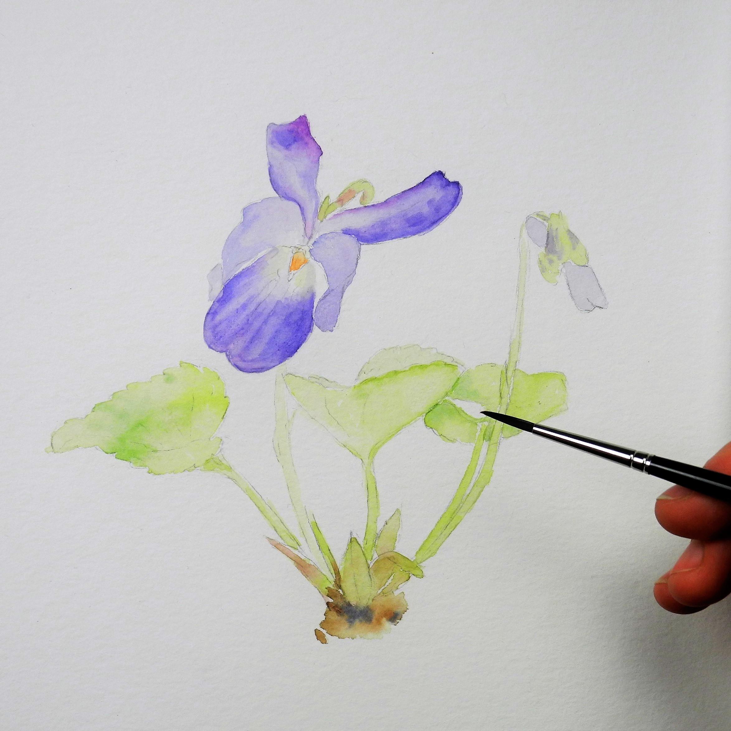 Meine fünf essentiellen Schritte um wunderschöne Wildblumen zu Malen