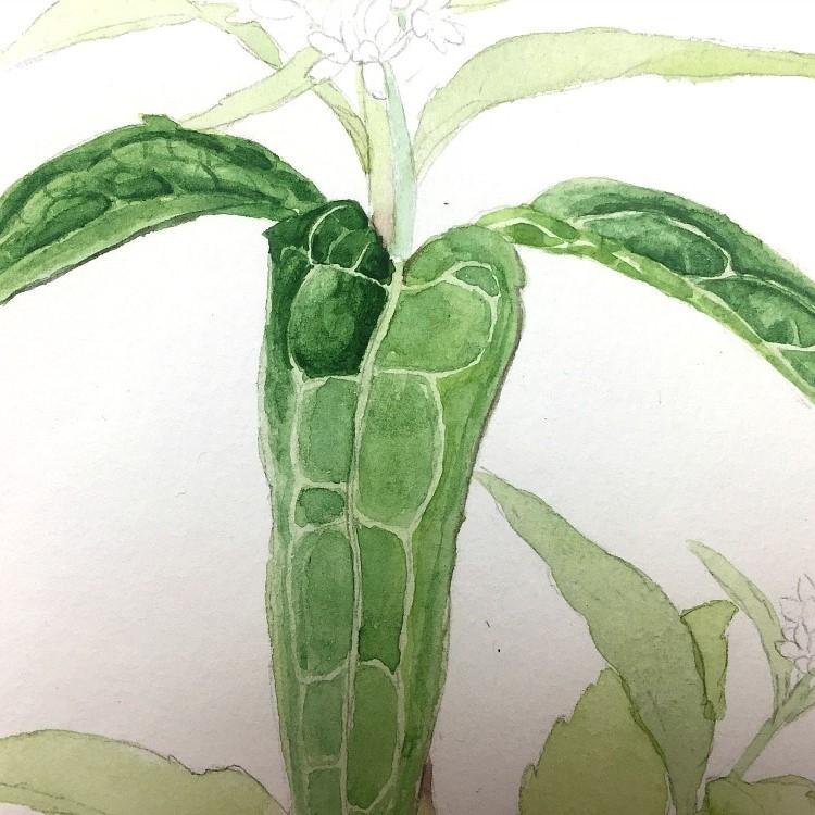 Blätter malen in Aquarell – Meine neuesten Tipps und Anwendungsbeispiele