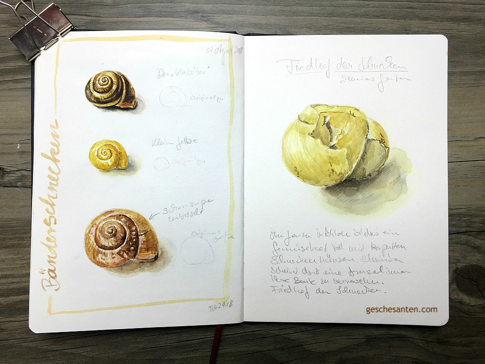 Schnecken im Naturskizzenbuch in Aquarell - Gesche Santen Blog