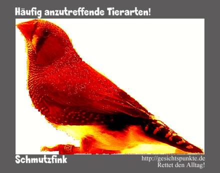 Häufig anzutreffende Tierarten: der Schmutzfink!