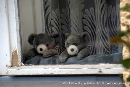 Fensteraußenanstrichwächter