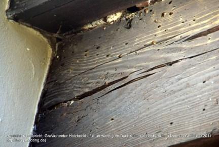 Bauschadensbericht: Gravierender Holzbockbefall an wichtigem Dachkonstruktionsbalken