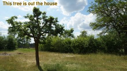 """The Tree is out the house....Kollegenzitat: Man sieht es ihm nicht an, aber auch dieser wunderschöne Baum wird """"verwaltet""""!"""