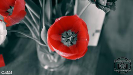 Blumenstrauß (DSC06101)