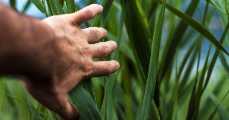 Lebensmittel-Branche: Gesunde Kost und nachhaltige Ernährungs-Sicherheit