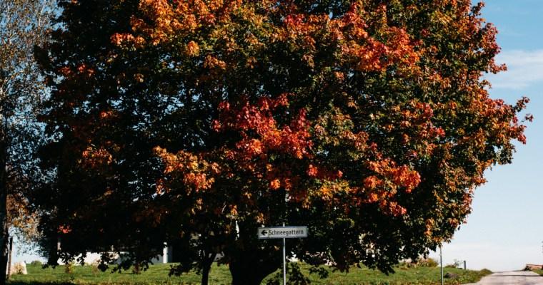Vom Baum bis zur Diele: Nachhaltige und wohngesunde Naturholzböden von mafi