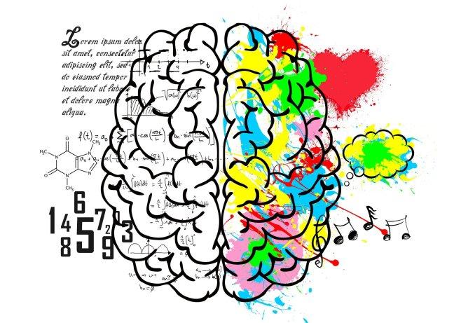 brain 5662029 1920