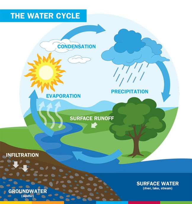 AM Water Cycle